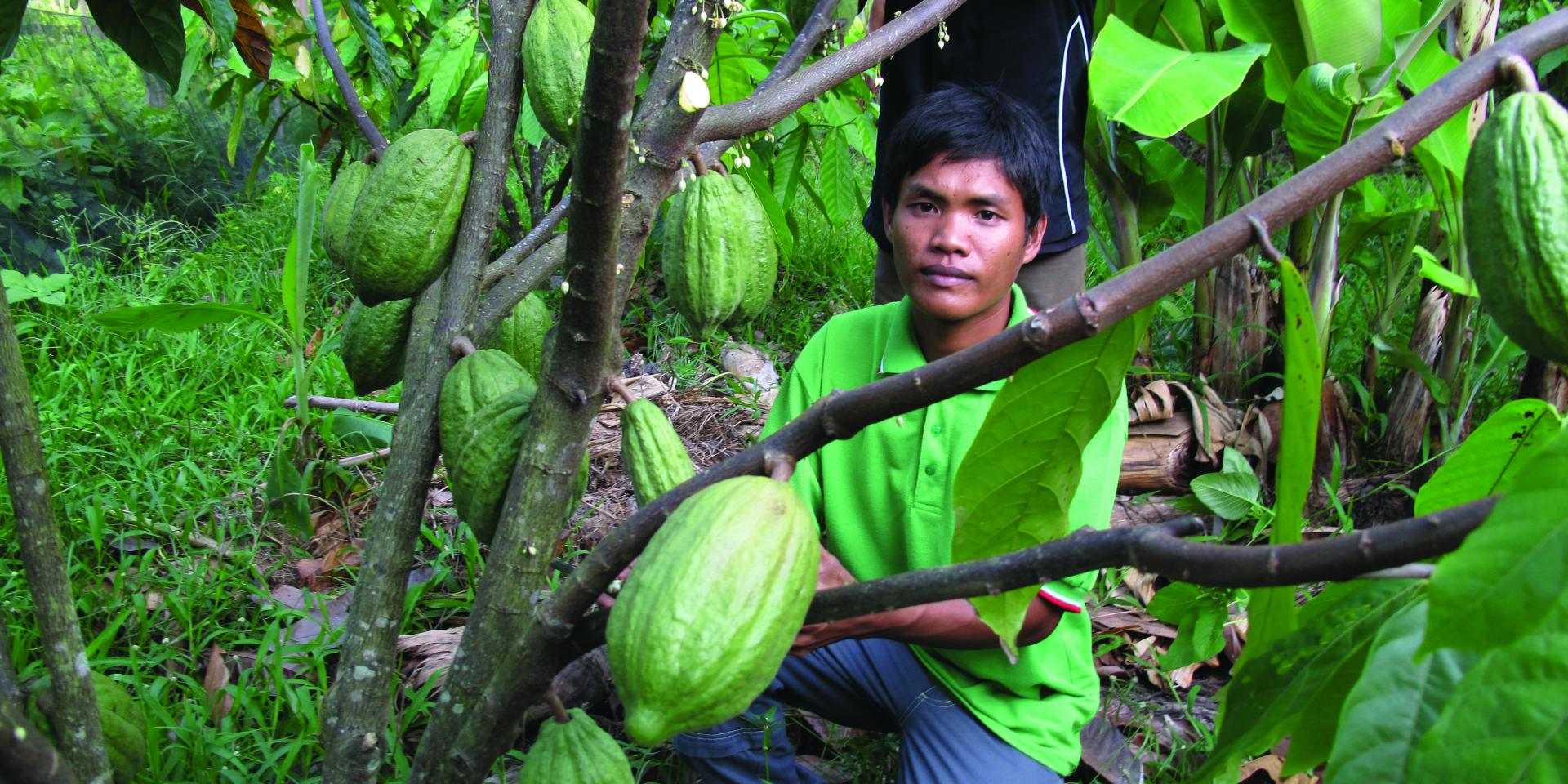 Village cocoa doctors like Muis Samsuddin are helping to transform cocoa farming in Sulawesi. Photo: ICRAF.