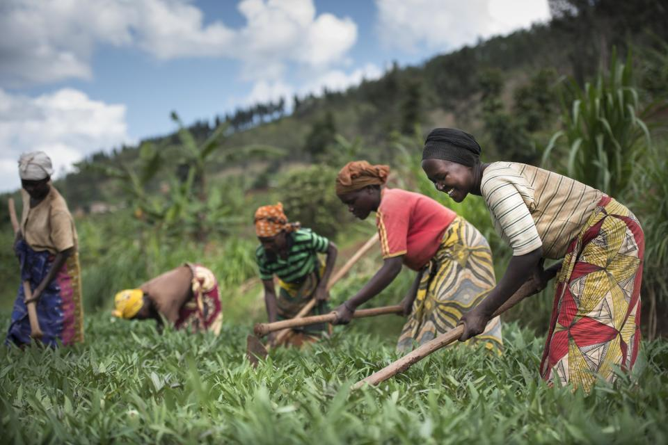 Women working crops in a field
