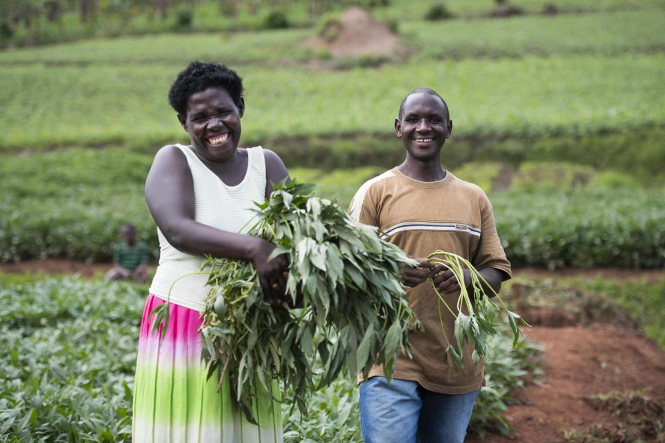 Jean Claude (R) is pictured selling some Kabode Orange Flesh Sweet Potato vines to a neighbour in rural Rwanda. Photo: CIP.