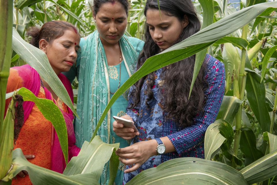 Farmers testing an app in the field in Nepal. Photo: C de Bode/CGIAR.