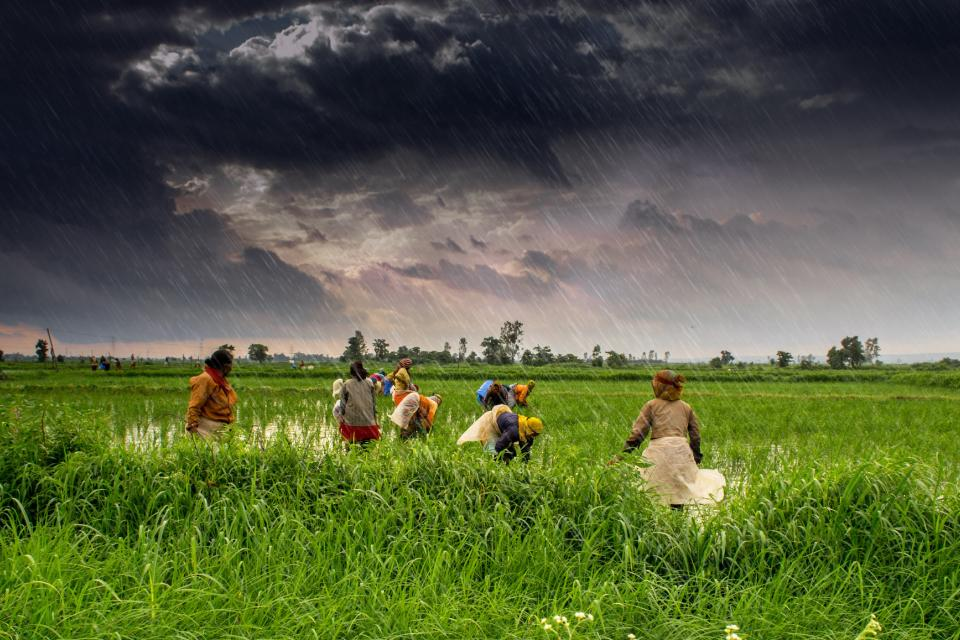 Photos of farmers in field.