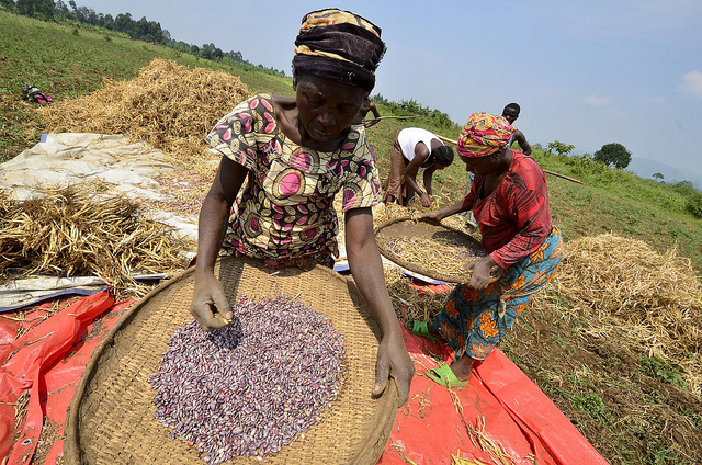 Cases of excellence - CGIAR Gender