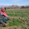 """Nafasgul, a woman farmer in the Parwan province of Afghanistan, is elated at her association with 'Hurra Jalali Agriculture Service and Seed Production Company'. When asked why , """"Our VBSE (Village Based Seed Enterprise) is unique. It is led by a woman,"""" she says with a chuckle."""