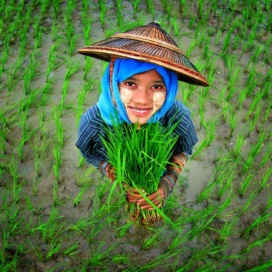 Girl surrounded by rice plants During the Monsoon season, we made a day trip with my cousins to Pyay, Myanmar. We passed the outskirts of the city and we found a vast area of green paddy fields. As we stopped by, we saw young girl farmers transplanting the paddy plants. This lovely girl was very happy to pose for my photo! Photo by Khant Zaw This photo was submitted to Bioversity International's photo contest 'Women and Agricultural Biodiversity':