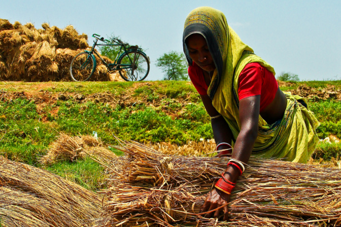 Women are the backbone of India's agricultural workforce, and their work burdens have increased as men have migrated to cities for work. Isagani Serrano/IRRI.