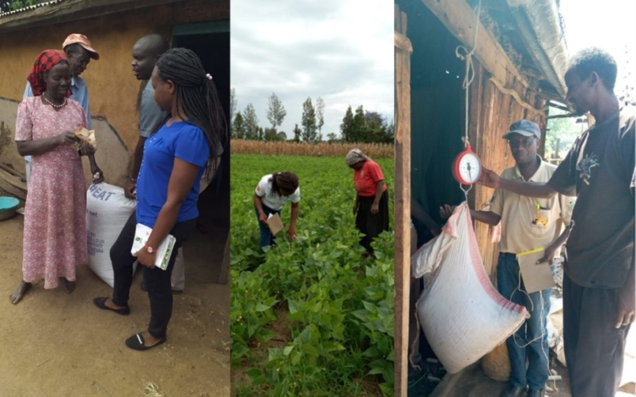 Agricultural officer Florence Mwachugha providing farmer-to-farmer crop management training; Smart Logistics weighing the seeds for purchase from the Ushirikiano Women SHG in Nakuru (from left to right).
