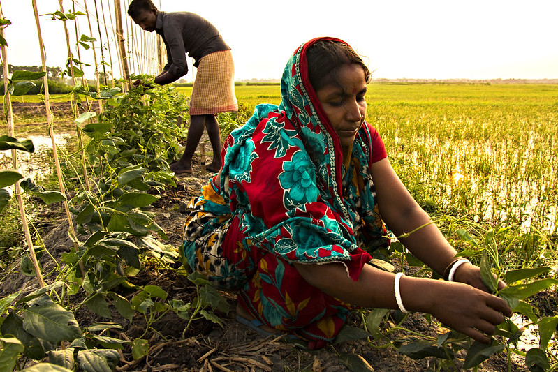 Farmers are taking care of vegetable they plan in their pond dike. Photo by AWM Anisuzzaman, Bangladesh.